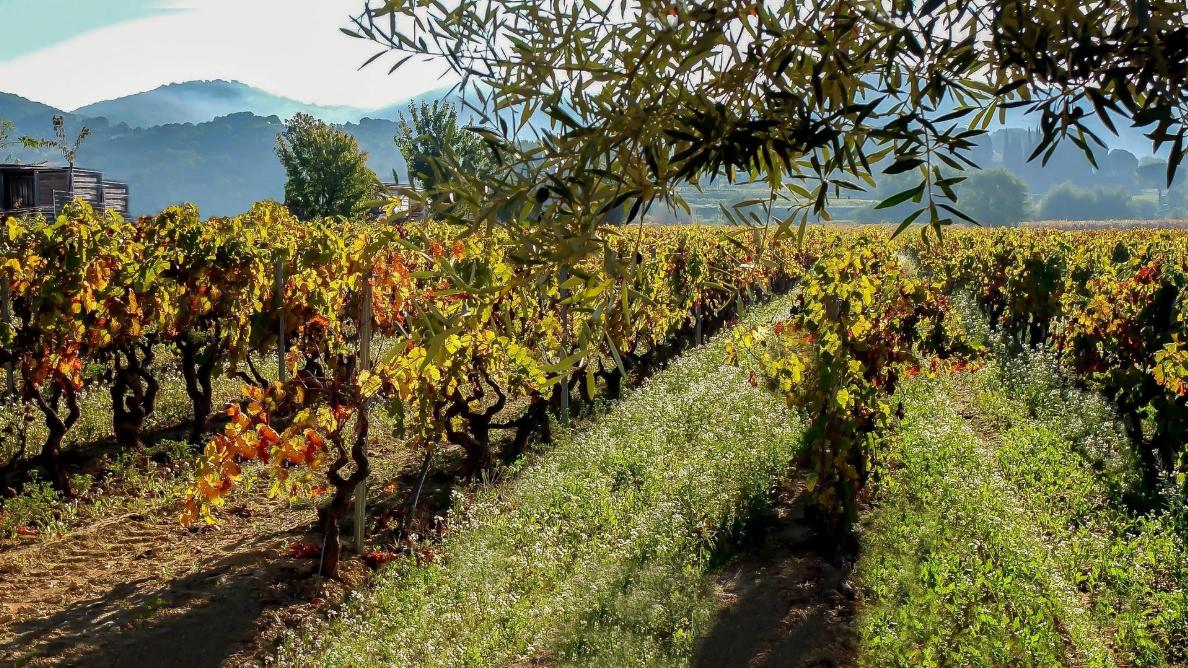 Les vins et le terroir de Bandol